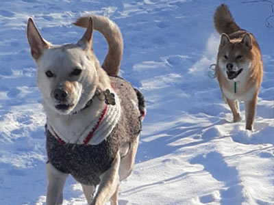 Dog Walking - Fort McMurray - Ann's Pet Services